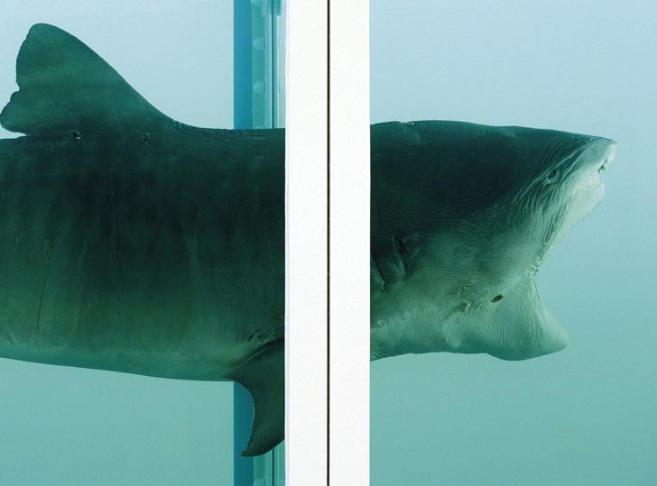 Damien Hirst Shark-02