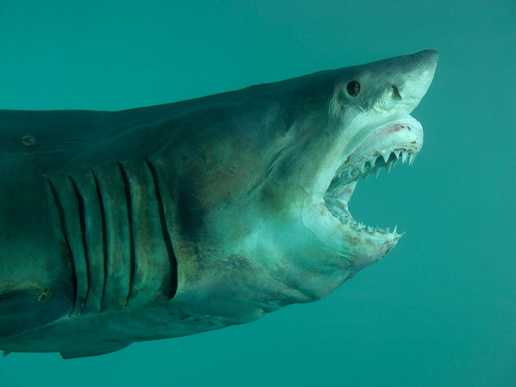 Damien Hirst Shark-04