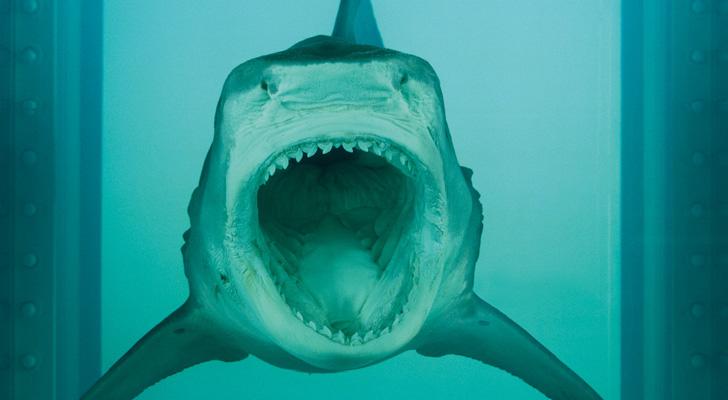 Damien Hirst Shark-05
