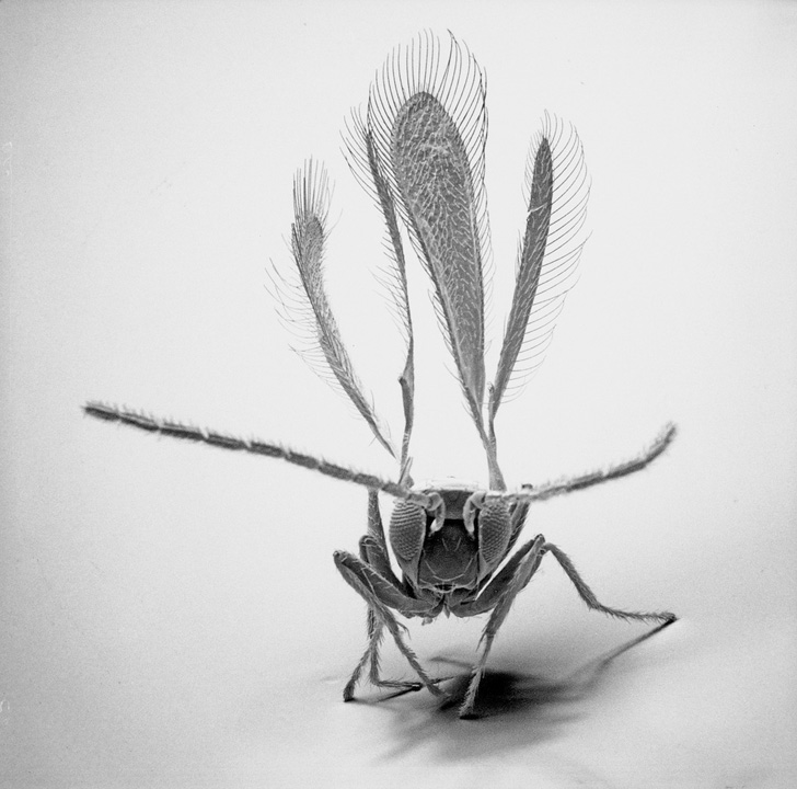 David M. Phillips Insects-02