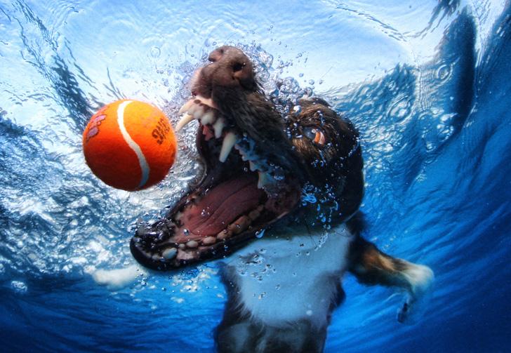 Seth Casteel Underwater Dogs-01