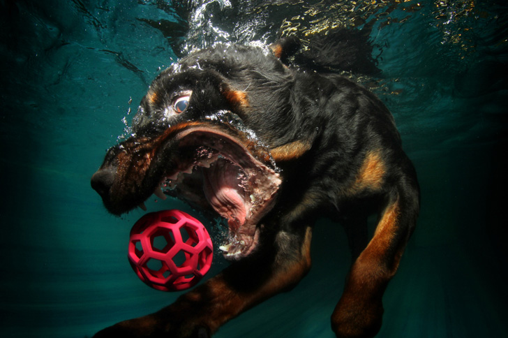 Seth Casteel Underwater Dogs-02