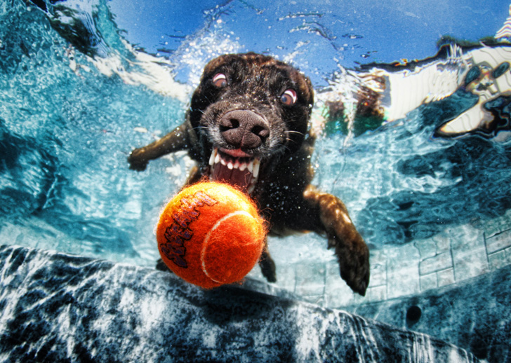 Seth Casteel Underwater Dogs-03