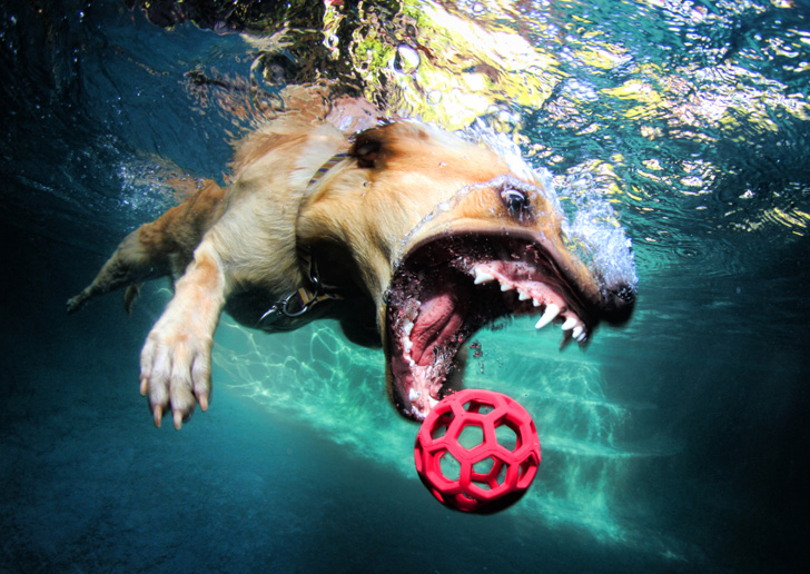 Seth Casteel Underwater Dogs-04