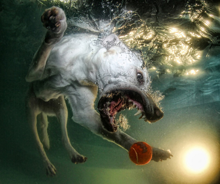Seth Casteel Underwater Dogs-05
