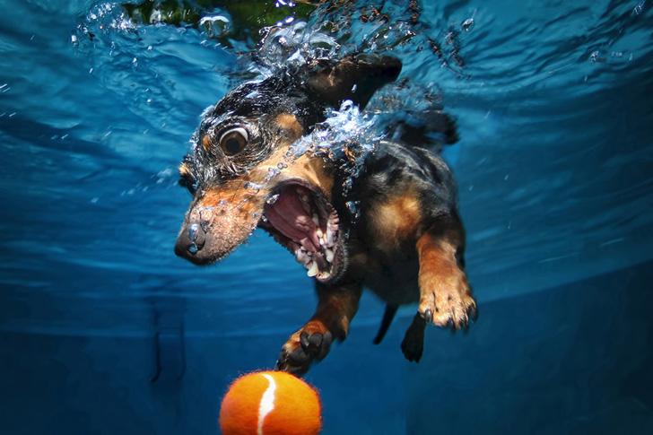 Seth Casteel Underwater Dogs-07