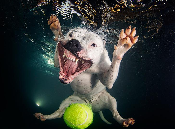 Seth Casteel Underwater Dogs-08