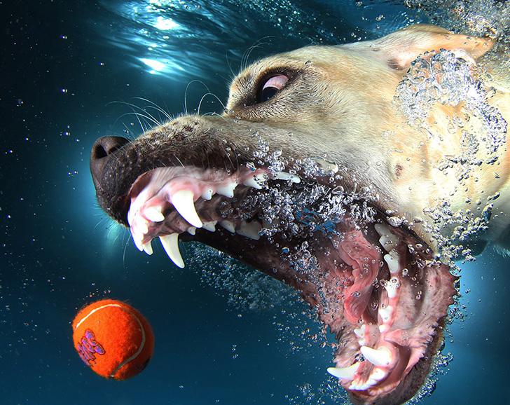 Seth Casteel Underwater Dogs-10