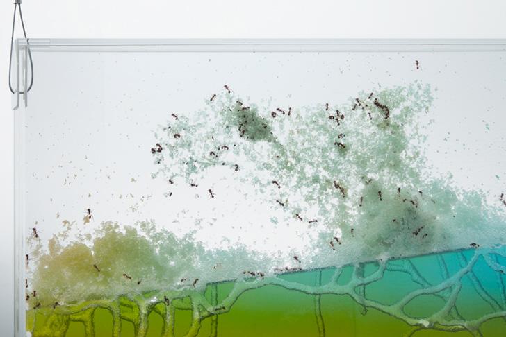 Brad-Troemel-Ants-5