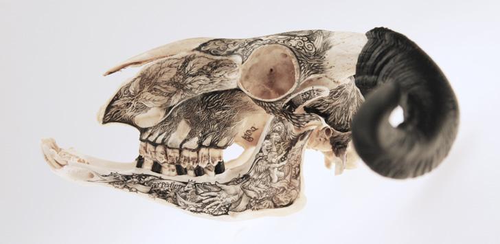 DZO Olivier Skulls-07